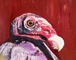Turk the Vulture